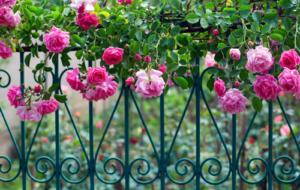 Gardena Kleingeräte Garten Grundausstattung - Alles auf einen Blick, mehrfarbig